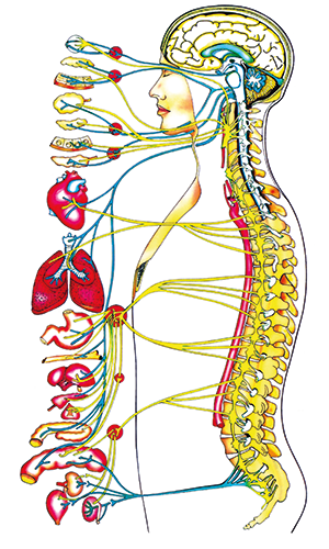 mon-quiropractic-cos-huma